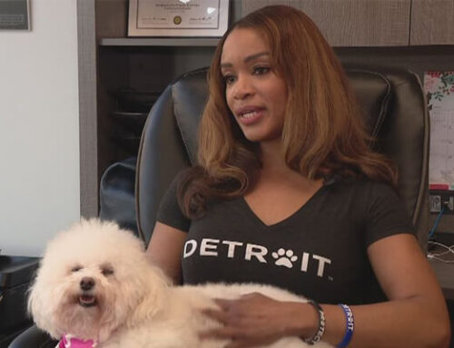 Introducing Swaggles, the pet-swag business helping animals everywhere DETROIT (FOX 2)